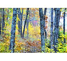 Painted Forest    Photographic Print