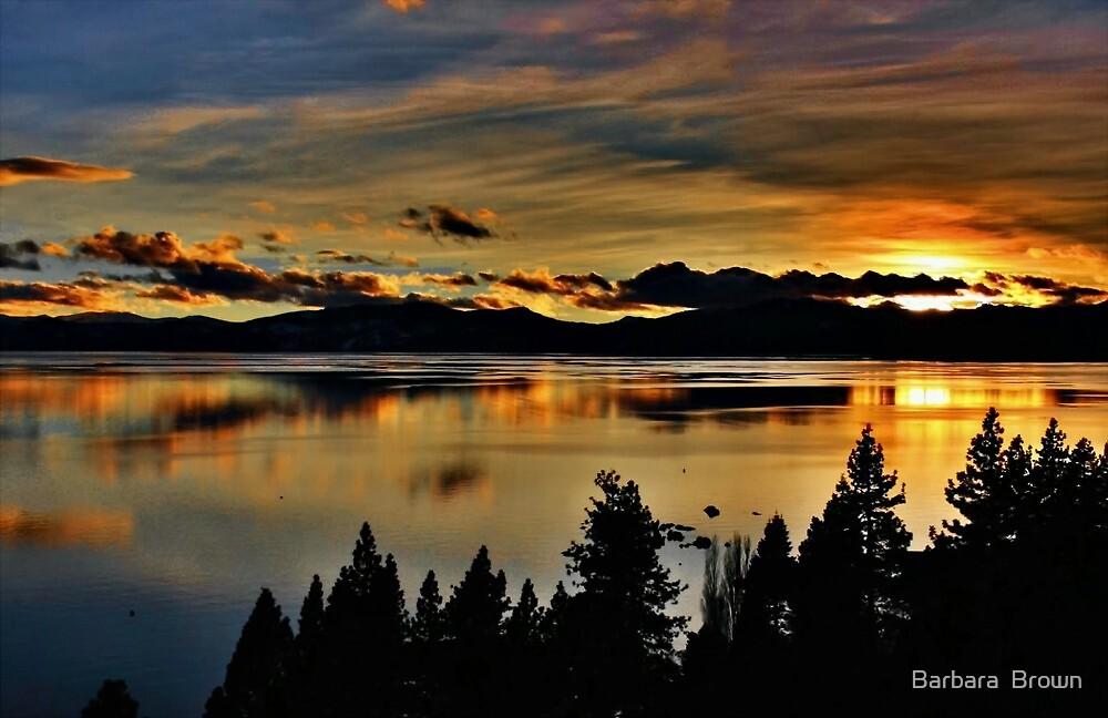 Lake Lights by Barbara  Brown