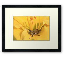 Grasshopper and Yellow Stamen Framed Print