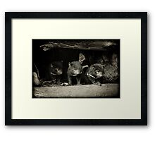 Little Devils Framed Print