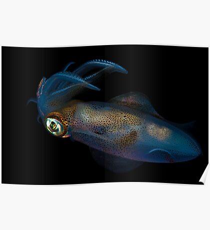Southern Calamari Squid Poster