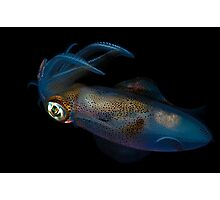 Southern Calamari Squid Photographic Print