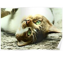Green Eyed Cat Poster