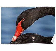 Black swan.  Poster