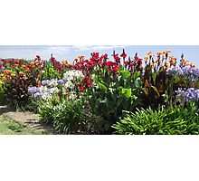Penguin road-side flower display Photographic Print