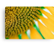 Front Garden Sunflower Macro Canvas Print