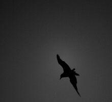 Mono Seagull by Gwynne Brennan