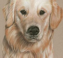 Golden Retriever - Sandy Nose by Nicole Zeug