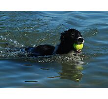 Boarder Collie Swimming To Shore Photographic Print