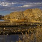 Golden Hour at the Bosque del Apache by Mitchell Tillison