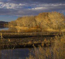 Golden Hour at the Bosque del Apache by Mitchell Tillison