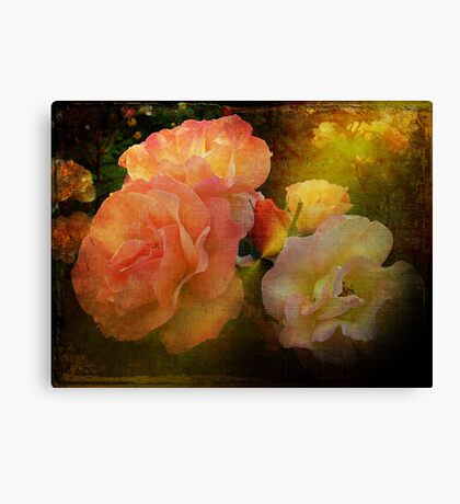 Old Roses Canvas Print