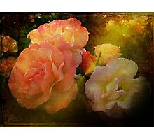 Old Roses Photographic Print