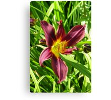Burgundy lily Canvas Print