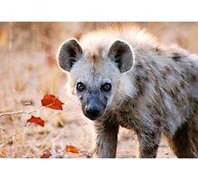 YEAH, I AM WATCHING YOU! - Spotted Hyaena - Crocuta crocuta Photographic Print