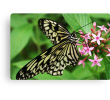 Butterflies in Cape Town Canvas Print
