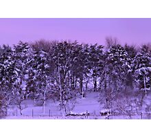 Winter's Beauty Photographic Print