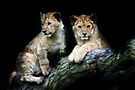 CUBS by Debbie Ashe