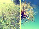 Summer diptych by Caterpillar