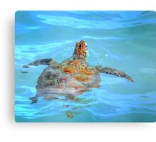 Hunting for  fish. Canvas Print