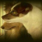 Chipper Boy by DottieDees