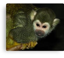 Curious (Squirrel Monkey) Canvas Print