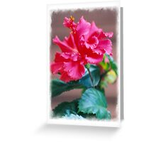 Hybiscus Flower Greeting Card