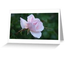 Single rose  Greeting Card