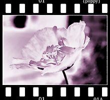 poppy in negative by Claire Elford