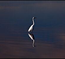 Great Egret by mimsjodi