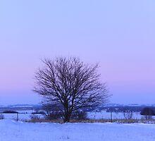 Winter evening bliss by Karen  Rubeiz