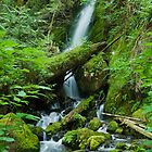 Merriam Falls II, Lake Quinault, WA by mikeno