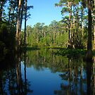 Through the trees ~ Okefenokee Swamp in south Georgia by Kyle Wolff