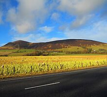In the Clyde Valley - Scotland by naphisoo