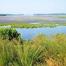 Chincoteaque Wildlife Refuge by teresa731