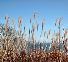 Golden Grass Swaying In The Breeze by lynn carter