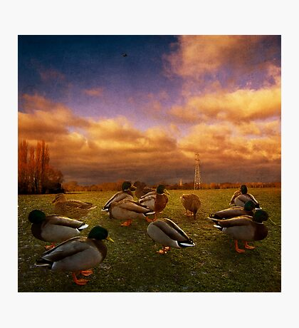 More Ducks Photographic Print