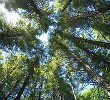 Vertigo in Tillamook State Forrest by jeremyridesbike