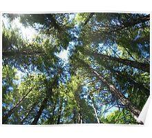 Vertigo in Tillamook State Forrest Poster
