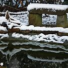 WinterGarden by RosiLorz