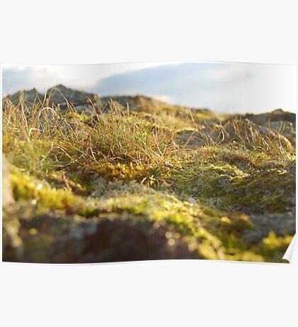 A miniture landscape Poster