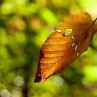 Floating Leaf by Murph2010