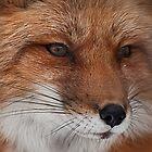 Foxy Baby by Wanda Dumas