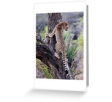 Cheetah Up Tree Greeting Card