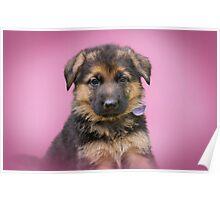 Valentine Puppy Poster