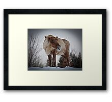 Can you Caribou? Framed Print