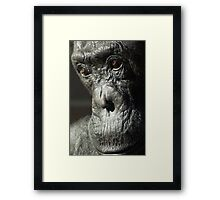 Wise Chimpanzee Framed Print