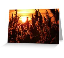 Glowing Reeds Greeting Card