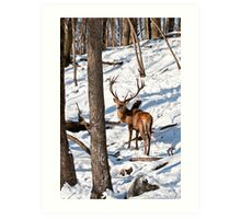 Red Deer in Forest Art Print