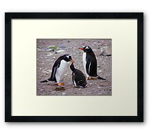 Gentoo Penguin Family Feeding Chick Framed Print